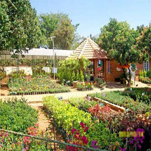 N S Hema Horticulture Center Kylasanahalli | APD India Center